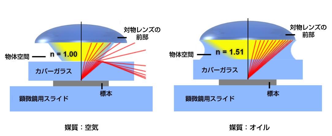 液浸媒体の比較