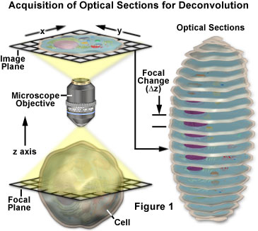 Acquisition of optical sections for deconvolution