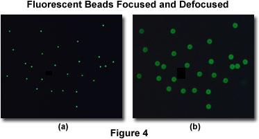 Fluorescent Beads Focused and Defocused