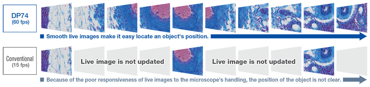 Microscope Digital Camara DP74 | Olympus Life Science