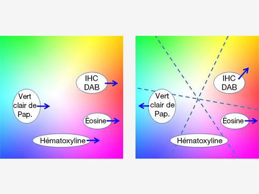 Figure5 – Avec l'ajustement colorimétrique traditionnel, l'amélioration du rouge (à gauche) pour l'éosine affecte tous les autres colorants, alors que l'ajustement colorimétrique multi-axial (à droite) permet une optimisation indépendante des couleurs pour chaque colorant