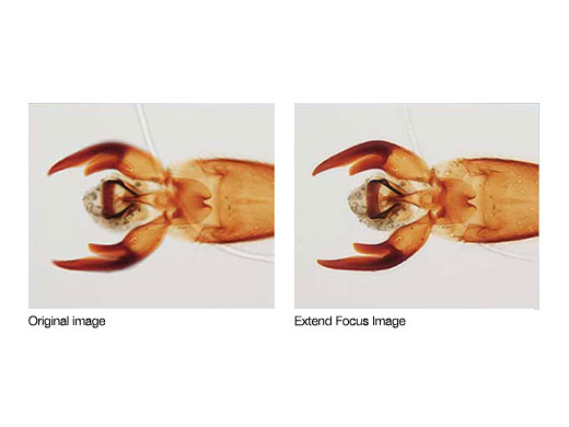 cellSens Extended Focus Imaging