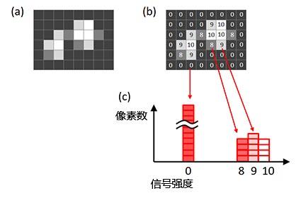 图6 – 图像的直方图(a)原始图像,(b)原始图像中每个像素的信号强度, (c)基于原始图像创建的直方图。