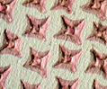 Dogfish Shark Placoid Scales