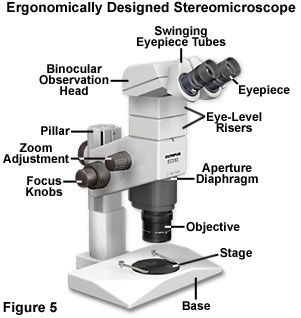 Stereo microscope diagram wiring library microscope ergonomics introduction to microscope ergonomics rh olympus lifescience com compound microscope diagram stereo microscope ray ccuart Choice Image