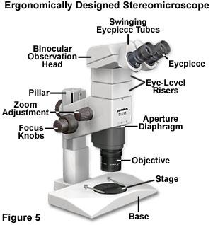 Microscope ergonomics introduction to microscope ergonomics ccuart Gallery