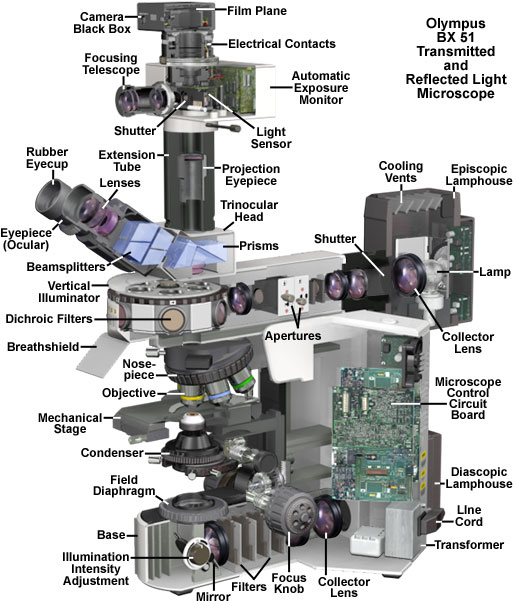 Olympus bx51 microscope cutaway diagram ccuart Image collections