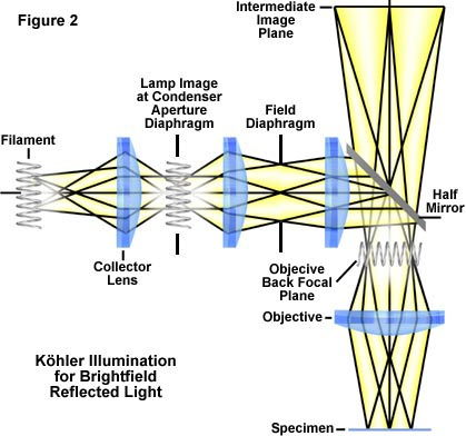 Khler illumination khler illumination in reflected light in khler illumination the system is arranged figure 2 so that the image of the coil filament of the lamp is brought into focus at the plane of the ccuart Images