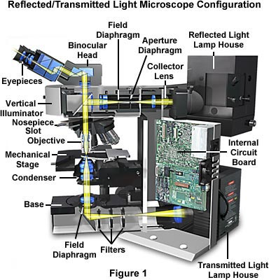 Reflected Light Microscopy Introduction To Reflected Light Microscopy
