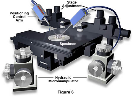 Anatomy Of The Microscope Microscope Stages