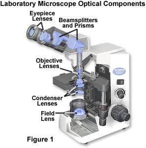 basic geometrical optics 117 fundamentals of photonics module 14 basic physical optics leno s pedrotti cord waco, texas in module 1-3, basic geometrical optics, we made use of.