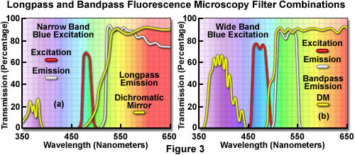 Confocal Microscopy - Interference Filters for Fluorescence