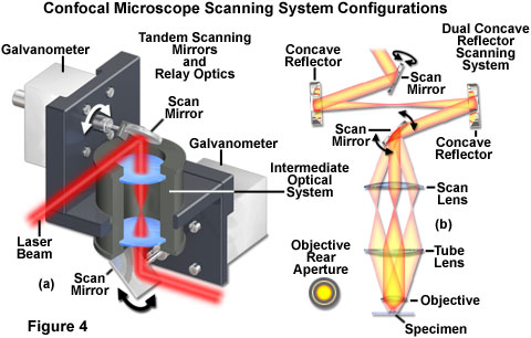 Confocal Microscopy Confocal Microscope Scanning Systems
