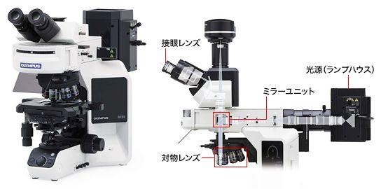 図1 正立型落射蛍光顕微鏡