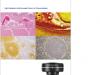 顕微鏡用デジタルカメラ DP27 カタログ