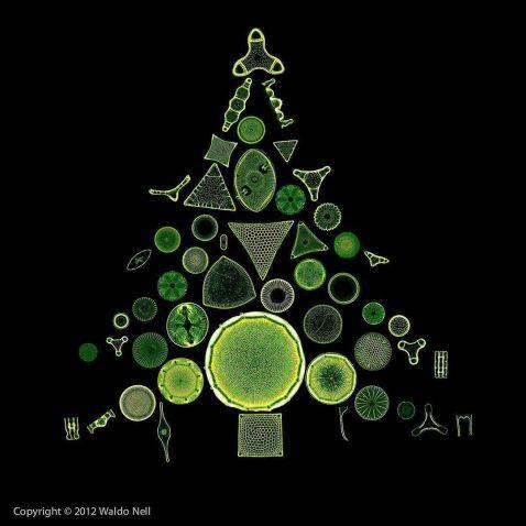 Diatom tree